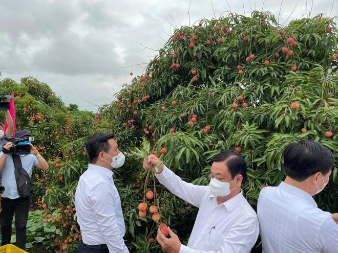 Việt Nam sẽ xuất khẩu khoảng 100 tấn vải thiều đi Úc ảnh 1