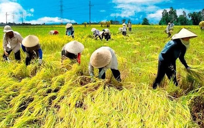 Ông Nguyễn Đình Cung, Viện trưởng CIEM cho biết, nếu 19% diện tích canh tác lúa được chuyển sang các cây trồng khác, nền kinh tế Việt Nam có thể thu được lợi ích là 6 tỷ USD trong 20 năm.