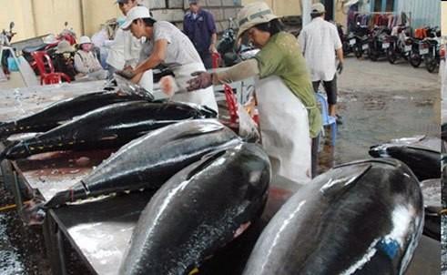 Xuất khẩu thủy sản của nước ta đã mang về 8,3 tỷ USD trong năm 2017, với sự đóng góp đáng kể của các mặt hàng: Tôm, cá tra, cá ngừ...