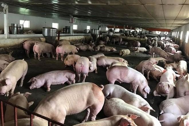 Việt Nam tạm dừng nhập khẩu thịt lợn Hungary và Ba Lan vì lo dịch tả ảnh 1