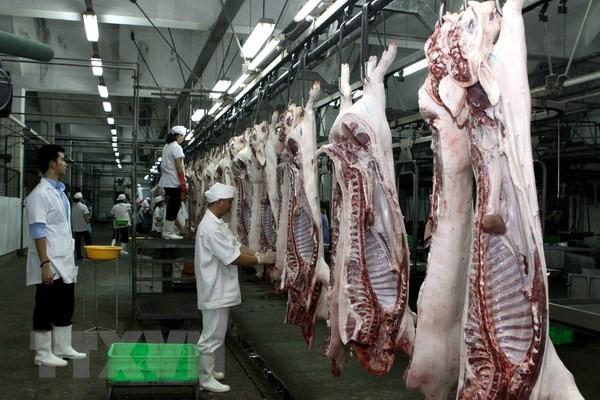 Giá lợn hơi có nơi đã lên tới 56.000 đồng/kg.