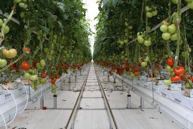 Kim ngạch xuất khẩu nông lâm thuỷ sản hơn 36 tỷ USD ảnh 1