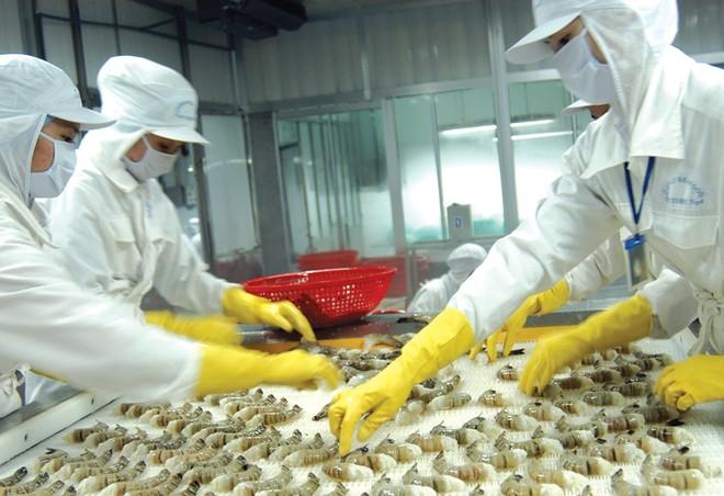 Tôm và cá tra là hai mặt hàng xuát khẩu chủ lực của ngành thủy sản Việt Nam.