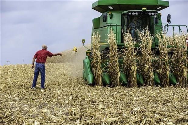 Nông dân thu hoạch ngô tại Hastings, bang Minnesota của Mỹ. (Ảnh: AFP/TTXVN).
