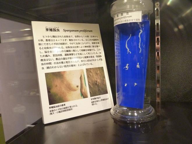 Mỗi mẫu vật đều được giới thiệu chi tiết về tác hại và vật chủ ký sinh.