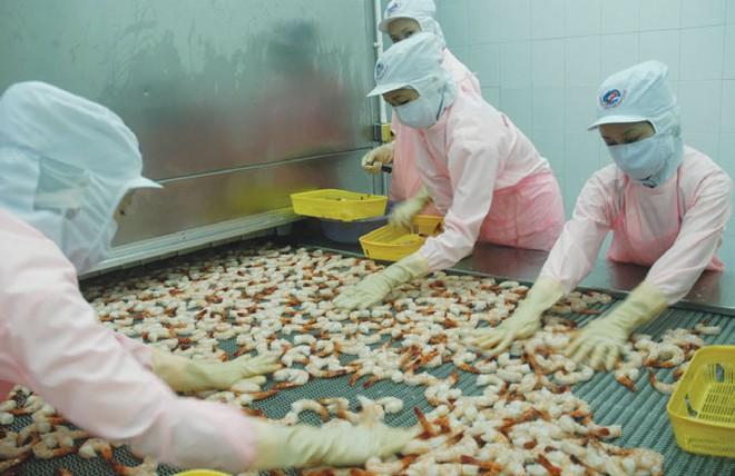 MPC đầu tư thêm 280 tỷ đồng vào Minh Phú - Lộc An