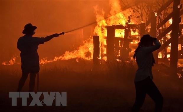 Hiện trường vụ cháy rừng tại Hillsville ở gần Taree, Australia. (Ảnh: AFP/TTXVN)