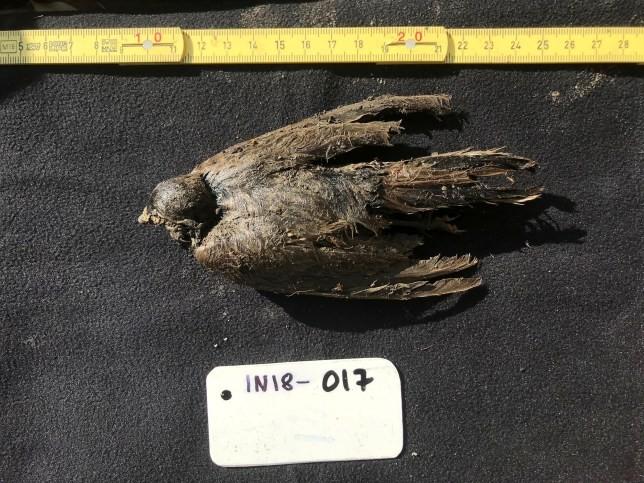 Con chim có tuổi thọ lên tới 46.000 năm tuổi.