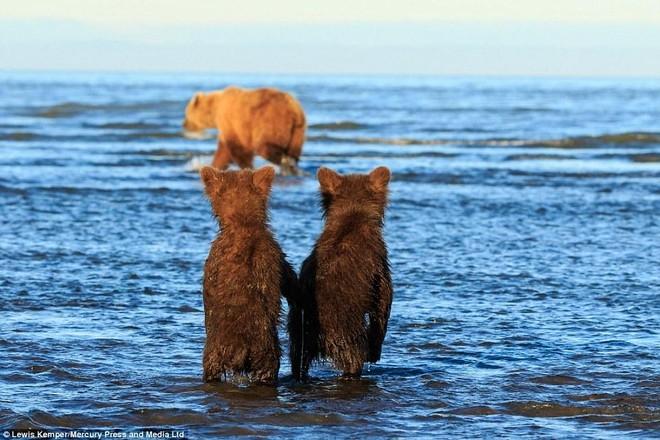 Mê mẩn khoảnh khắc đôi gấu con khoác tay, cùng nhau ngóng trông gấu mẹ đi săn mồi ảnh 3