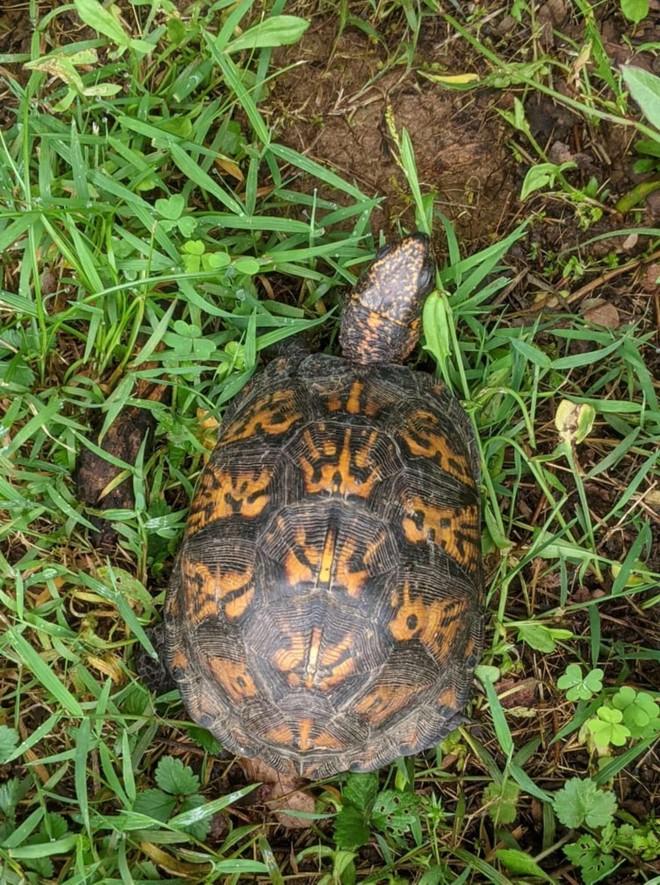 Giải cứu con rùa bị mắc kẹt, cô gái suýt ngất xỉu sau khi phát hiện ra điều bí ẩn nằm phía dưới ảnh 4