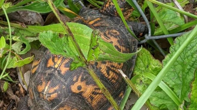 Giải cứu con rùa bị mắc kẹt, cô gái suýt ngất xỉu sau khi phát hiện ra điều bí ẩn nằm phía dưới