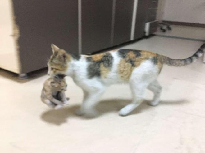 Chú mèo bế con đến bệnh viện và câu chuyện phía sau khiến ai cũng phải mỉm cười ảnh 1