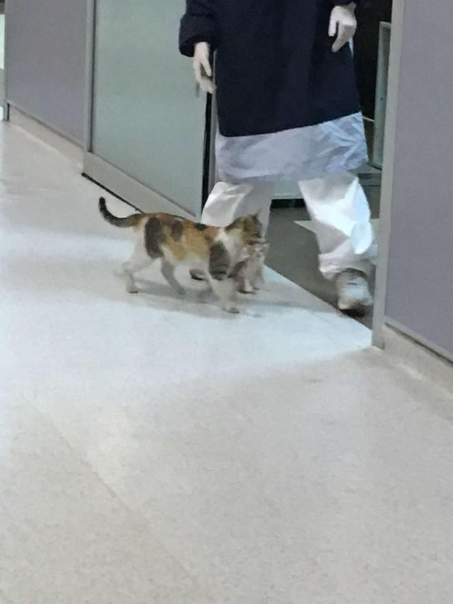 Chú mèo bế con đến bệnh viện và câu chuyện phía sau khiến ai cũng phải mỉm cười ảnh 3