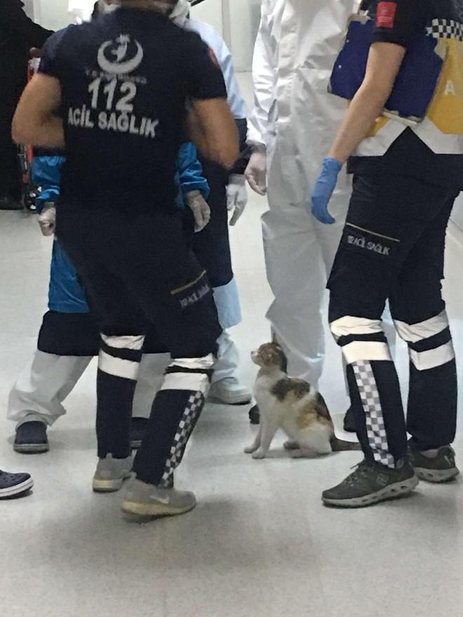Chú mèo bế con đến bệnh viện và câu chuyện phía sau khiến ai cũng phải mỉm cười ảnh 4