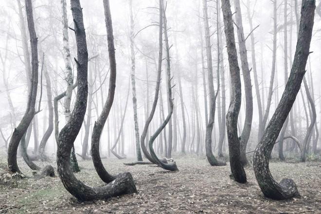 Rừng cây bí ẩn có hình dáng kỳ lạ, chưa từng tìm được lời giải đáp từ các nhà khoa học