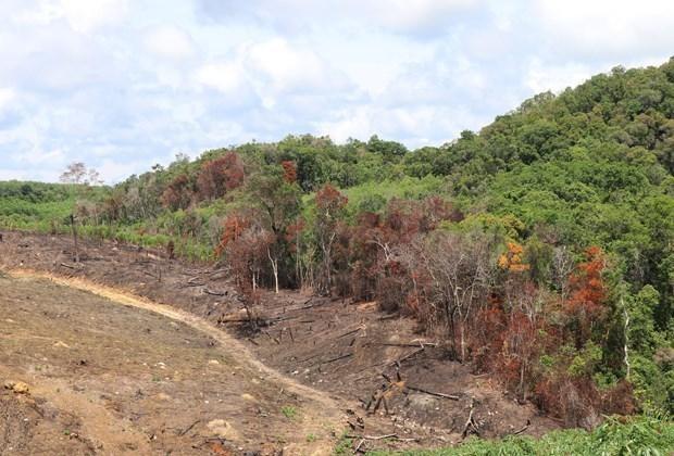 Vi phạm quản lý đất đai, một doanh nghiệp bị thu hồi hơn 220 ha đất