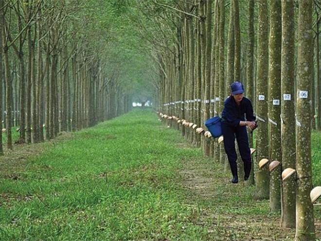 Cao su Phước Hòa (PHR) đã nhận hỗ trợ 456 tỷ động đền bù đất dự án Khu công nghiệp Nam Tân Uyên
