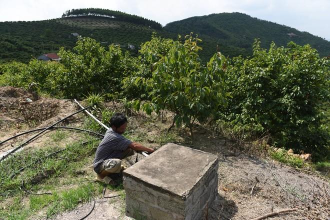 Lần đầu tiên, 600 tấn vải thiều Bắc Giang xuất khẩu thành công sang Nhật Bản ảnh 10