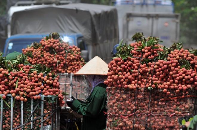 Lần đầu tiên, 600 tấn vải thiều Bắc Giang xuất khẩu thành công sang Nhật Bản ảnh 5