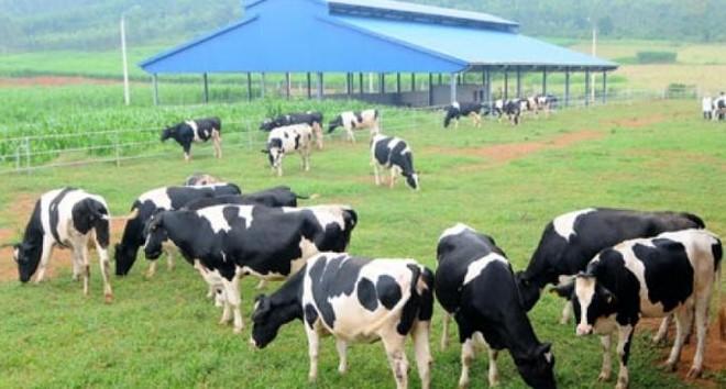 Sữa Việt Nam (VNM) trình kế hoạch lợi nhuận năm 2021 đi ngang