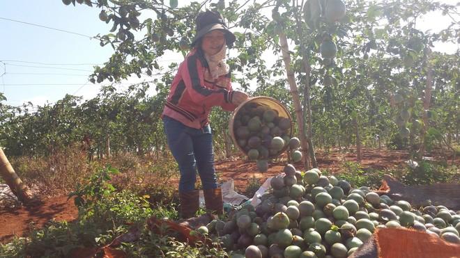 Dự án được xây dựng sẽ góp phần bao tiêu các sản phẩm nông nghiệp cho nông dân Gia Lai