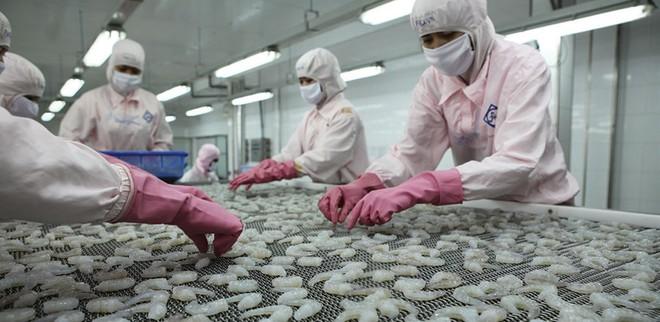 Doanh nghiệp xuất khẩu tôm của Việt Nam đang gặp nhiều thuận lợi từ cơ chế, chính sách và thị trường