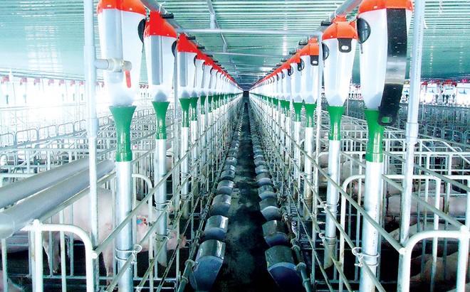 """Khủng hoảng thịt lợn và """"gót chân Achiles"""" của ngành nông nghiệp Việt - Bài 2 ảnh 1"""