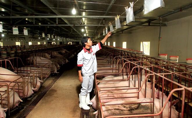 Dự báo, đến năm 2027, sản lượng thịt lợn trong các trang trại chiếm tỷ trọng trên 70%