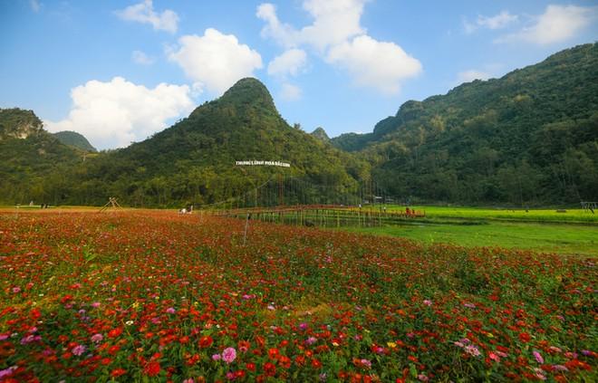 Bên trong thung lũng hoa lớn nhất Việt Nam ảnh 1