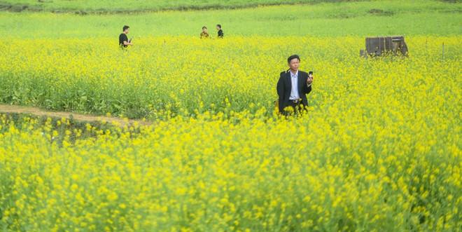 Bên trong thung lũng hoa lớn nhất Việt Nam ảnh 2