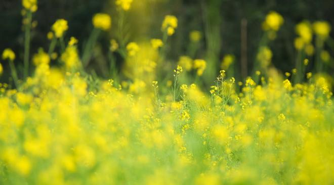 Bên trong thung lũng hoa lớn nhất Việt Nam ảnh 3