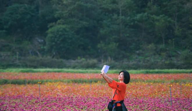 Bên trong thung lũng hoa lớn nhất Việt Nam ảnh 4
