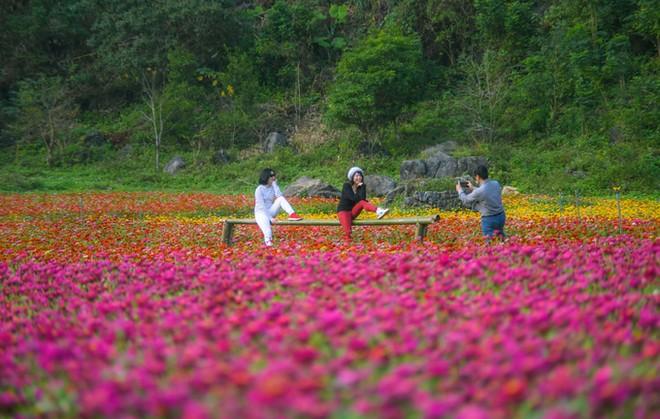 Bên trong thung lũng hoa lớn nhất Việt Nam ảnh 6