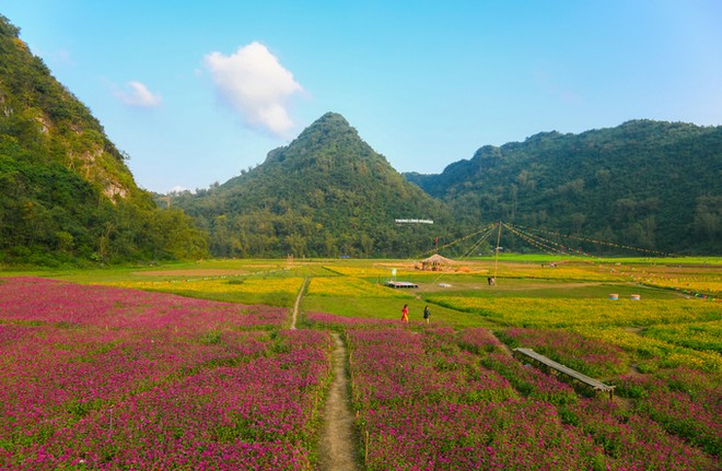 Bên trong thung lũng hoa lớn nhất Việt Nam ảnh 7