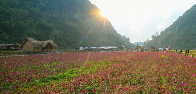Bên trong thung lũng hoa lớn nhất Việt Nam ảnh 9