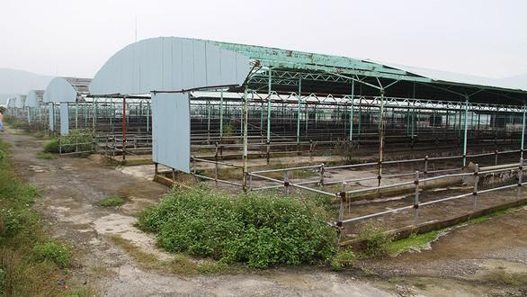 Hoang tàn dự án nuôi bò của Công ty Bình Hà tại Hà Tĩnh - Ảnh: VĂN ĐỊNH