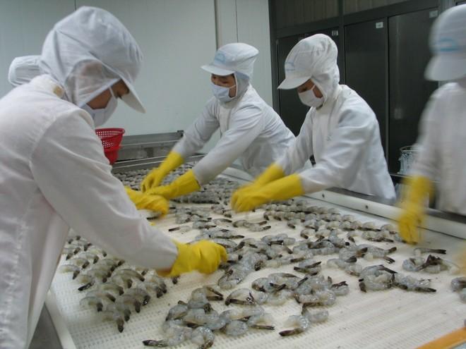 Quý II năm nay, dự kiến xuất khẩu tôm Việt Nam sang Nhật Bản tăng khoảng 5% đạt khoảng 297,9 triệu USD.