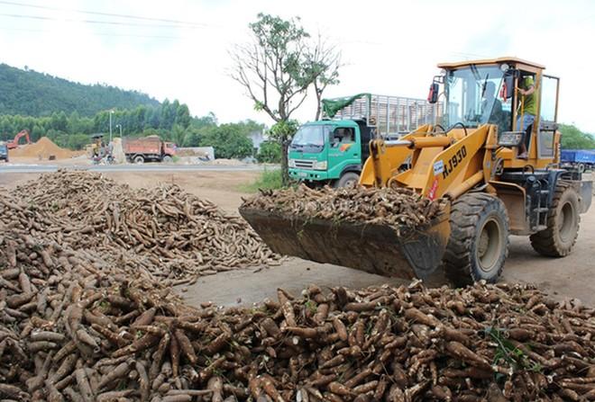 Xuất khẩu sắn và các sản phẩm từ sắn 5 tháng 2019 ước đạt 414 triệu USD, giảm 17,6 % về khối lượng và giảm 11% so với cùng kỳ năm 2018.