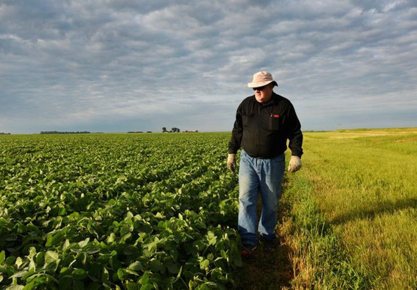 Anh William Hejl đang kiểm tra cánh đồng trồng đậu nành của mình tại thành phố Amenia, bang North Dakota, trong ảnh chụp ngày 6-7-2018 - Ảnh: REUTERS