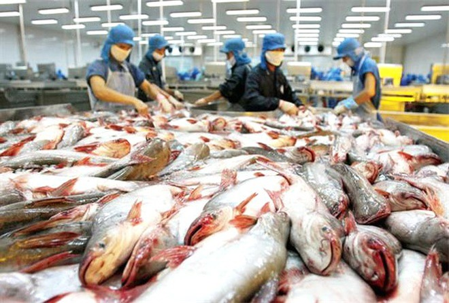 Nông sản của nước ta như thủy sản, rau quả... vẫn vấp phải những hạn chế do thiếu tính đồng nhất trong từng lô hàng xuất vào EU.