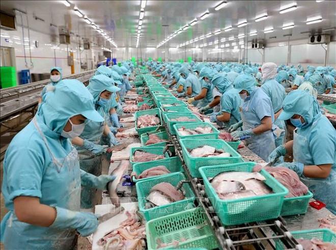 Dây chuyền chế biến phi lê cá tra xuất khẩu tại nhà máy của Công ty Cổ phần Đầu tư & Phát triển Đa Quốc gia (Tập đoàn Sao Mai) ở Cụm công nghiệp Vàm Cống, huyện Lấp Vò (Đồng Tháp). Ảnh: Vũ Sinh/TTXVN