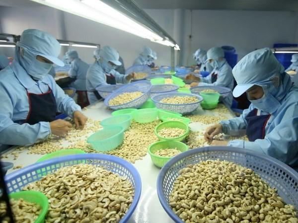 Hiệp hội Điều Việt Nam (Vinacas) khuyến cáo các nhà máy chế biến nên bình tĩnh, không nên bán tháo.