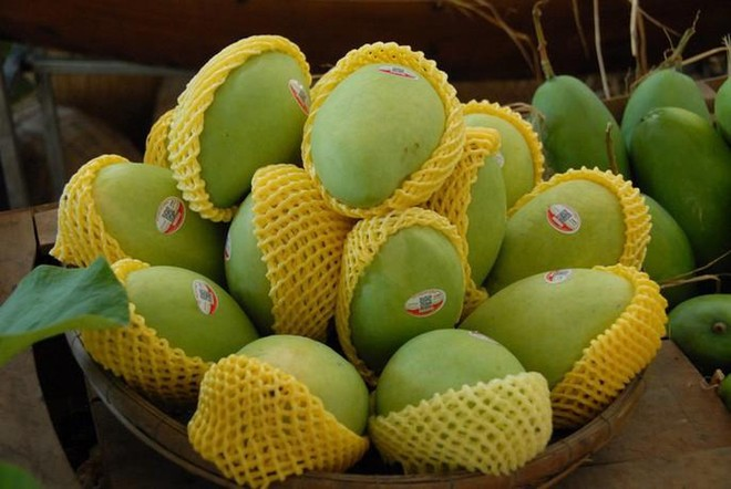 Không có kiểm dịch viên để kiểm tra hàng trước khi chiếu xạ nhiều lô hàng trái cây sang Mỹ bị tồn kho gây khó khăn cho doanh nghiệp xuất khẩu.