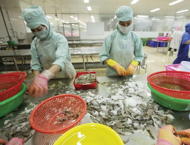 Chế biến tôm xuất khẩu tại Công ty TNHH Thủy sản Hồng Ngọc. Ảnh: Đức Thanh