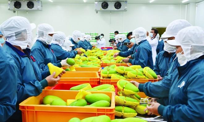 RCEP sẽ giúp mở cửa để Việt Nam nhập khẩu hàng hóa rẻ hơn, đặc biệt là các nguyên vật liệu đầu vào phục vụ sản xuất.