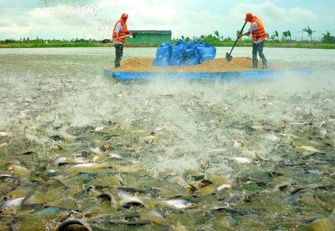 Lượng hàng tồn kho cá tra của Mỹ đã hết, kỳ vọng tích cực cho ngành thủy sản