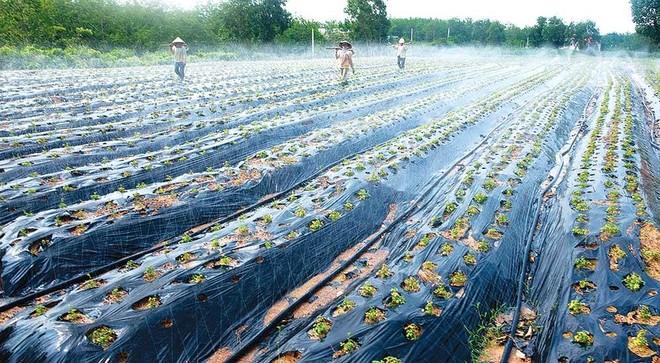 Việc áp dụng tiến bộ khoa học - kỹ thuật trong canh tác giúp nông dân Quảng Bình tăng năng suất sản phẩm