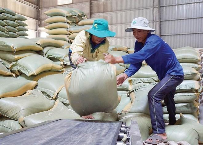 Xuất khẩu gạo có nhiều cơ hội tăng cả về sản lượng lẫn giá bán trong năm 2021. Ảnh: Đức Thanh