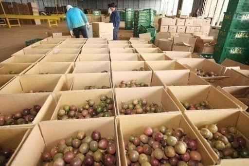 Thị trường Anh nhập khẩu 3,6 triệu tấn hoa quả, trị giá hơn 5,4 tỷ USD mỗi năm, là điểm đến cho nhiều loại trái cây nhiệt đới của Việt Nam.