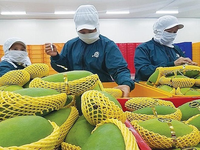 Tổ có nhiệm vụ giúp Bộ trưởng chỉ đạo sản xuất, kết nối cung ứng tiêu thụ nông sản tại các tỉnh, thành phố phía Bắc trong điều kiện dịch Covid-19.
